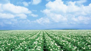 white-flower-field-wallpapers-1920x1080